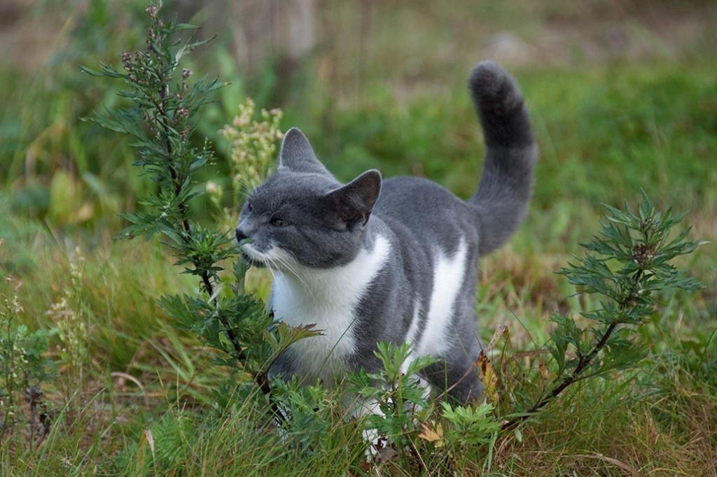 kissa-ja-pujo_tunkkari