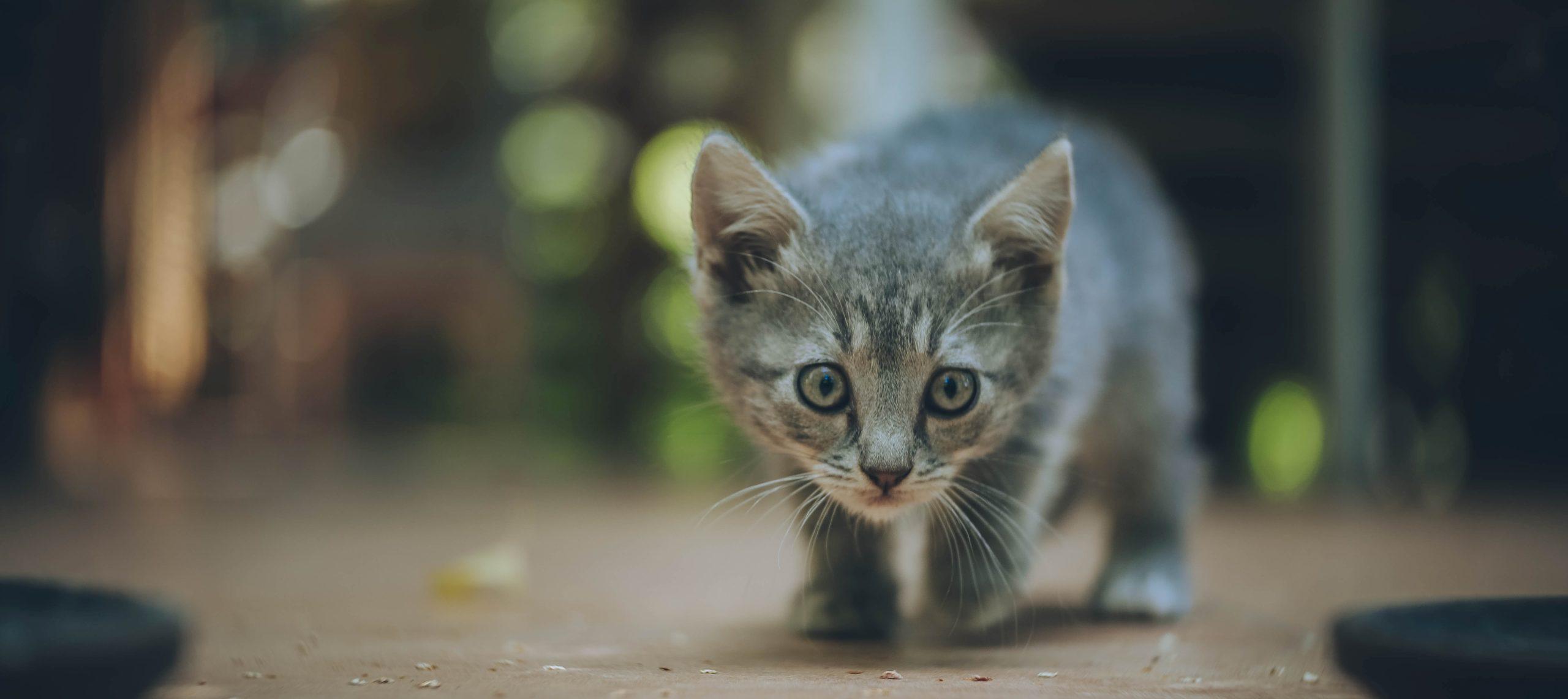 valvomaton ulkoilu on kissalle riski
