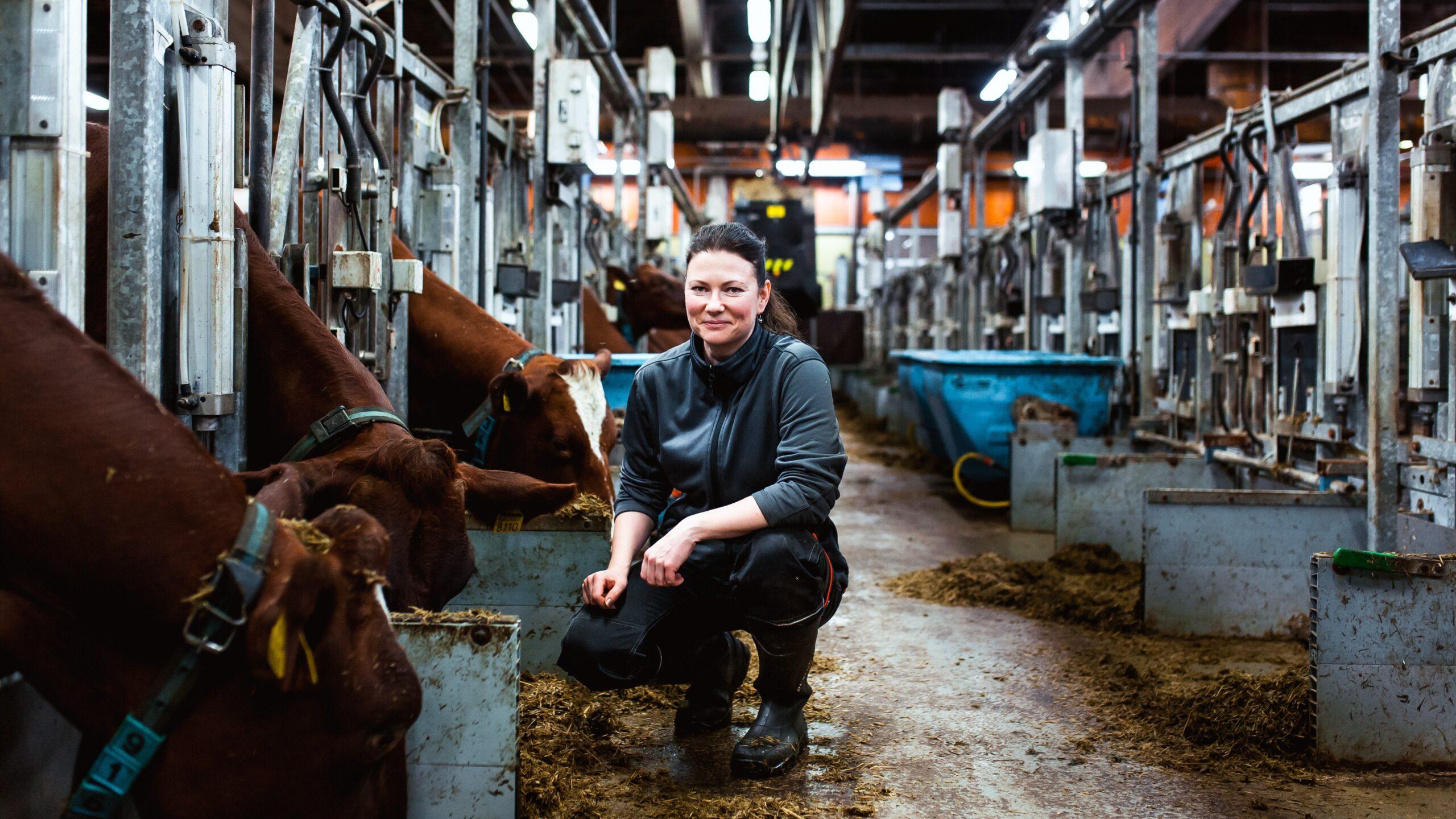 eläinten hyvinvointi, politiikka ja talous; kuva navetasta