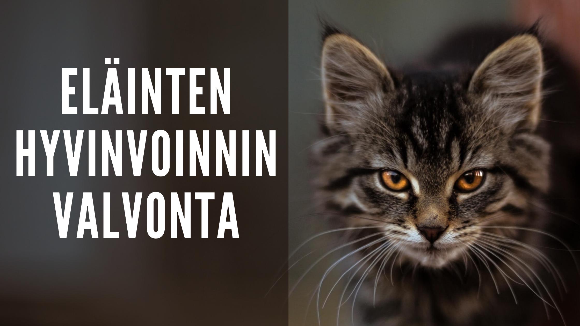 eläinten hyvinvoinnin valvonta; kuvassa kissa